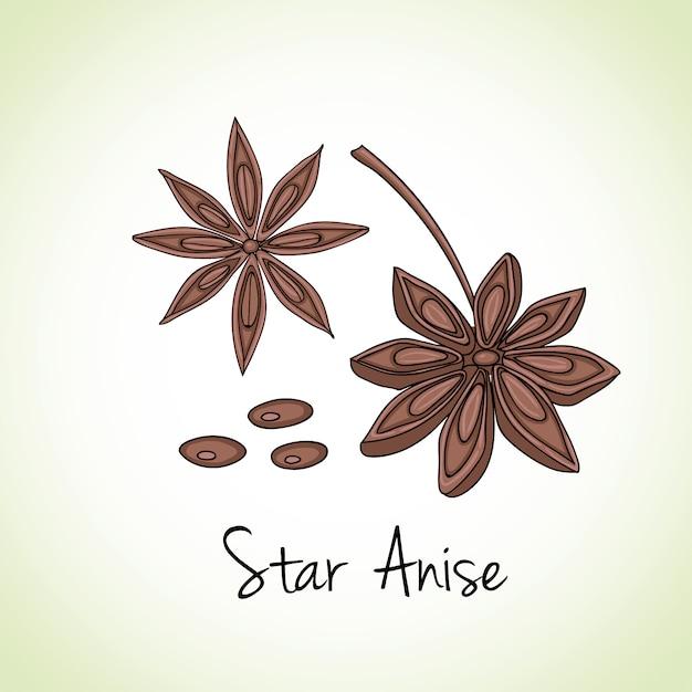 Anis estrelado ervas e especiarias. | Vetor Premium