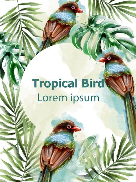 Aquarela de cartão trópico de pássaros coloridos Vetor Premium