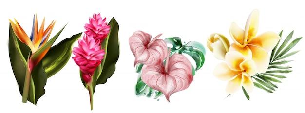 Aquarela de coleção de flores tropicais Vetor Premium