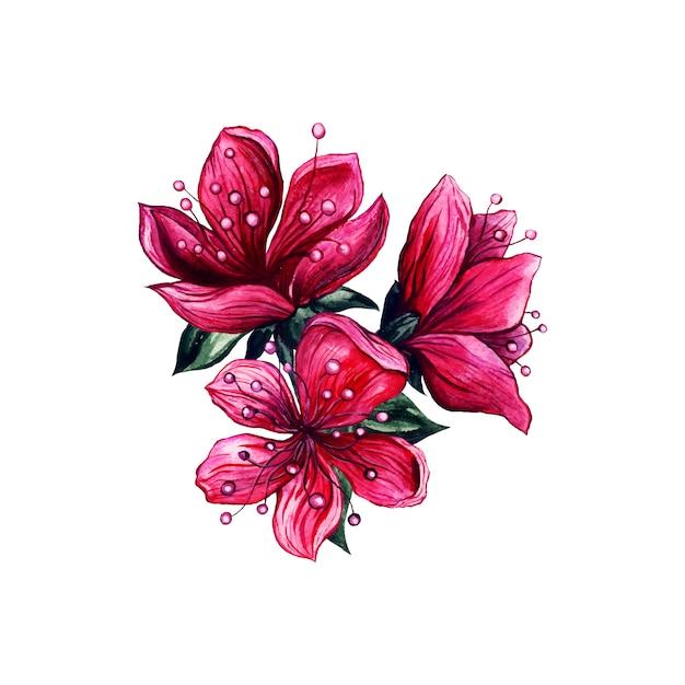 Aquarela de flores cor de rosa, flor de ameixa japonesa Vetor grátis