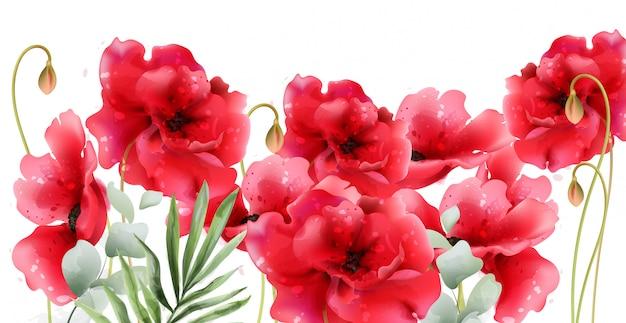 Aquarela de flores de papoula Vetor Premium
