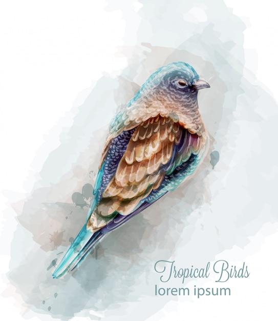 Aquarela de pássaro colorido trópico Vetor Premium
