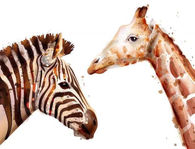 Aquarela de zebra e girafa Vetor Premium