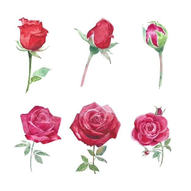 Aquarela flor elemento rosa vermelha aquarela em branco para uso decorativo. Vetor grátis