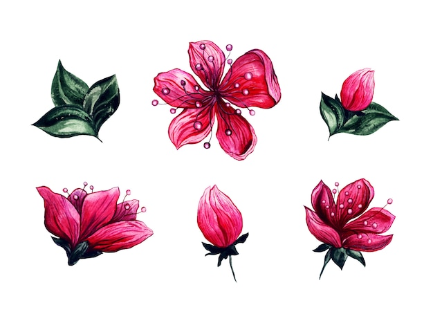 Aquarela floral flores de cerejeira Vetor grátis