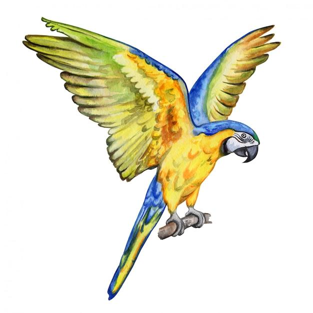 Arara papagaio voando Vetor Premium