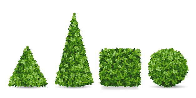 Arbustos de buxo de diferentes formas. topiários em forma de pirâmide, esfera, cubo. elementos decorativos do paisagismo do jardim. Vetor Premium