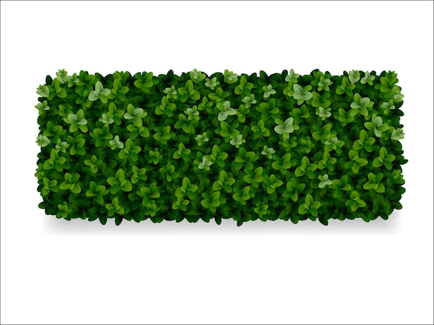 Arbustos retangulares de buxo, cerca verde Vetor Premium