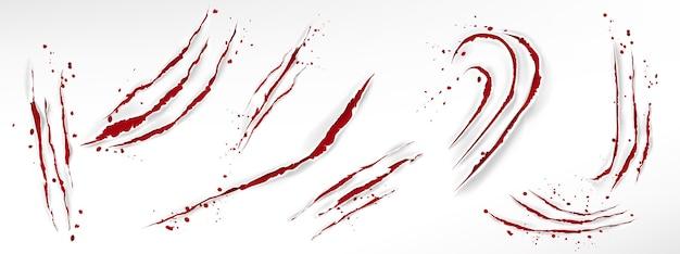 Arranhões de garras de gato com gotas de sangue, cortes vermelhos rasgados de animais selvagens Vetor grátis