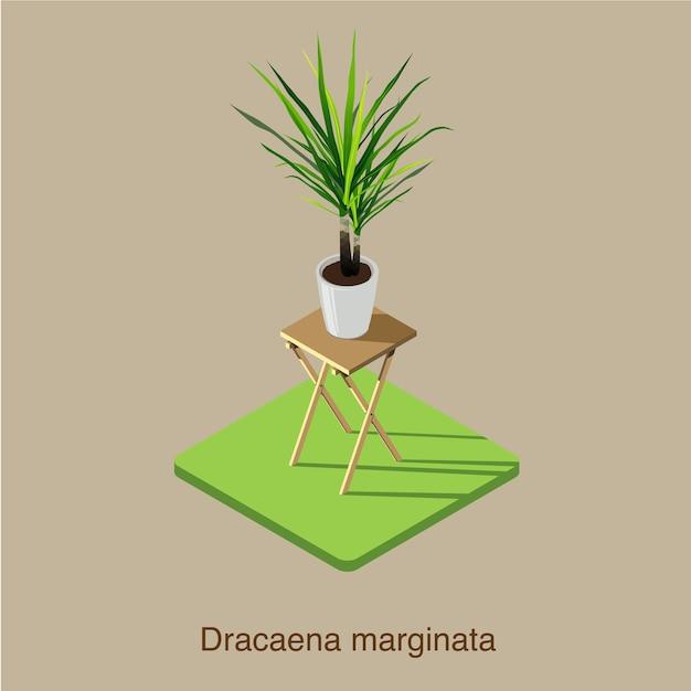 Arte 3d isométrica do vetor do marginata do dracaena. Vetor Premium