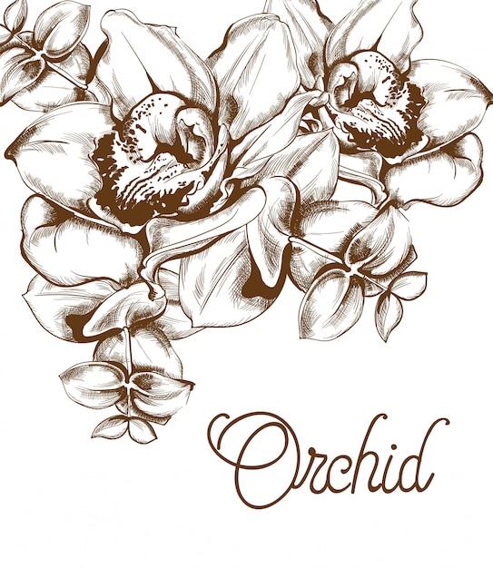 Arte de linha de flores de orquídea Vetor Premium