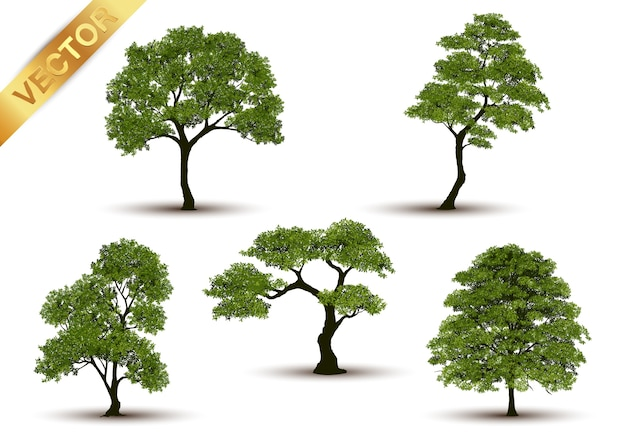 Árvore bonita realística em um fundo branco. Vetor Premium