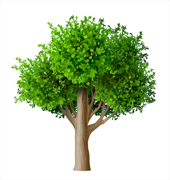 Árvore de vetor realista com folhas Vetor Premium
