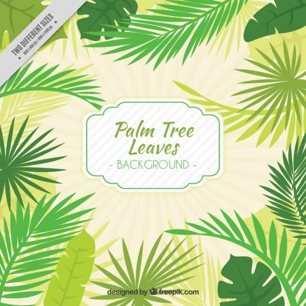 Arvore Desenho Folhas De Palmeira Fundo Vetor Gratis