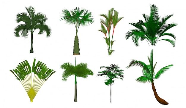 Árvore do vetor que brilha a palmeira da palmeira. isolado Vetor Premium