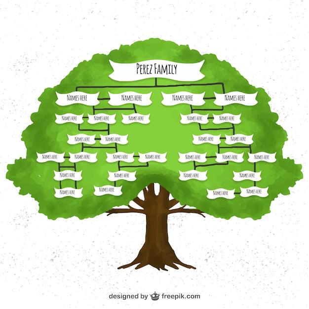 Árvore genealógica watercolor Vetor grátis