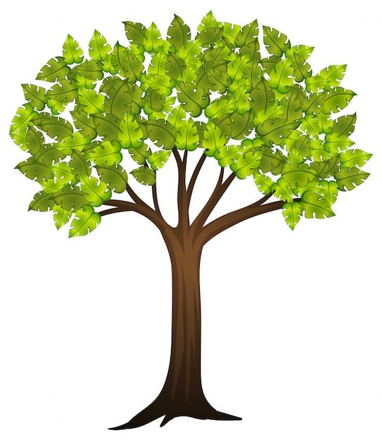 Árvore isolada no fundo branco Vetor grátis