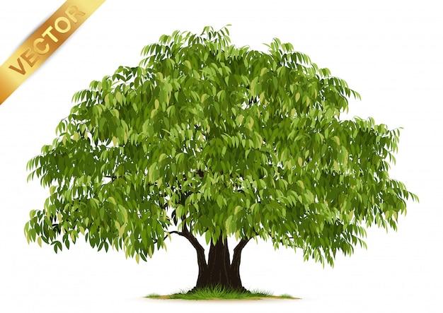 Árvore realista isolado Vetor Premium