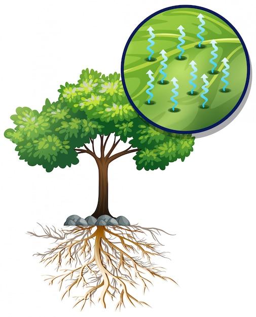 Árvore verde grande e células vegetais próximas Vetor grátis
