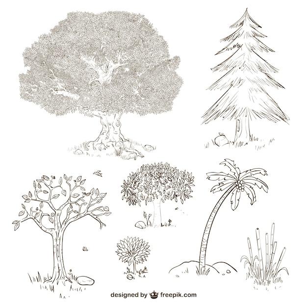 Arvores E Plantas Desenhos Vetor Gratis