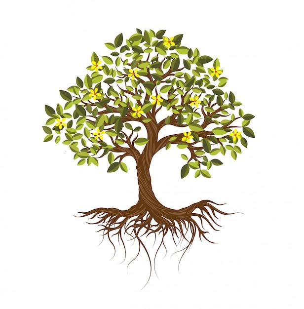 Árvores isoladas no fundo branco. Vetor Premium