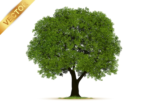 Árvores realistas isoladas Vetor Premium