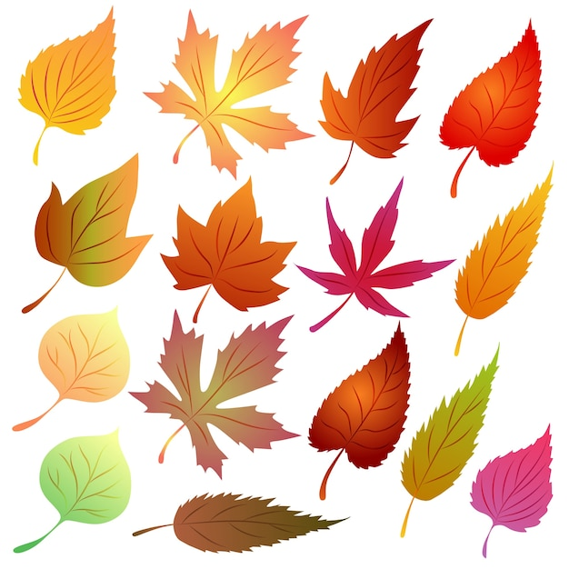 Autumn leaves vector set tema sazonal Vetor Premium