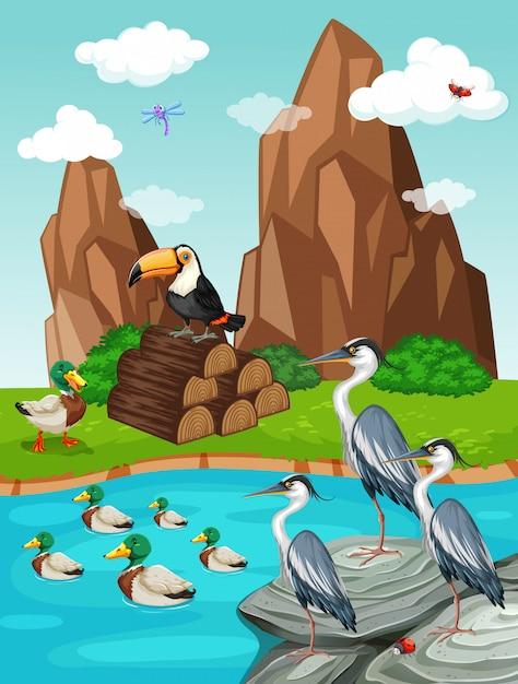 Aves e patos à beira da lagoa Vetor grátis
