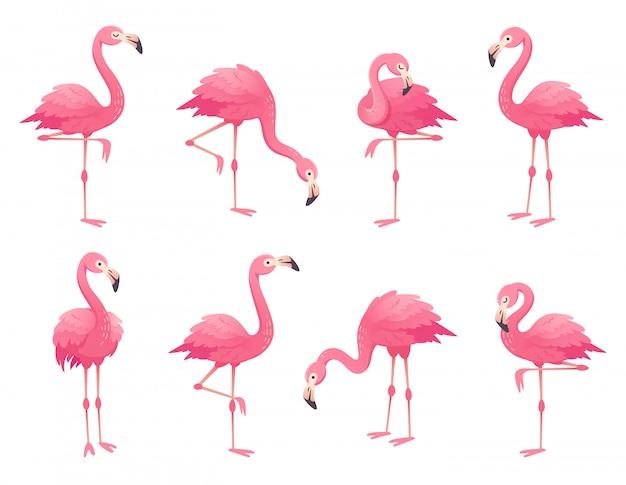 Aves exóticas flamingos cor de rosa. Vetor Premium