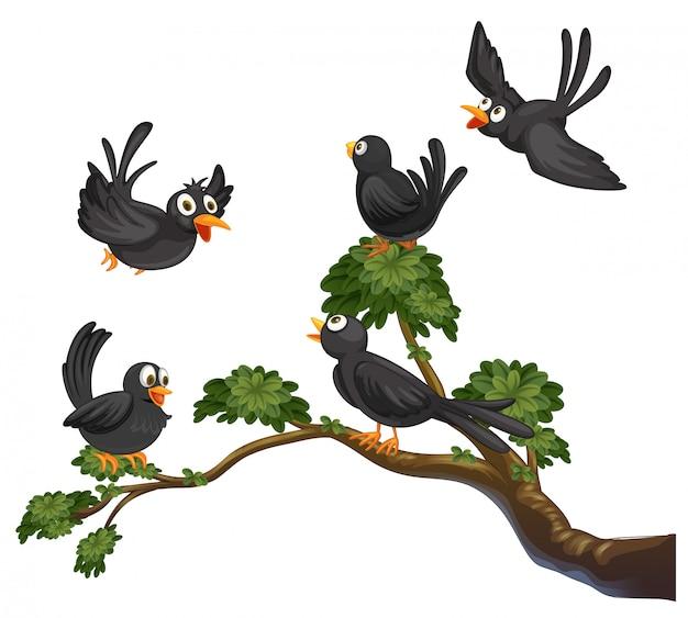 Aves negras Vetor grátis