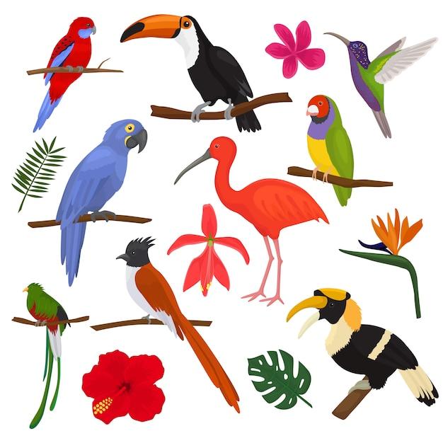 Aves tropicais vector papagaio exótico tucano e beija-flor com conjunto de ilustração de folhas de palmeira de moda passarinho ibis ou calau nos trópicos de floração isolados no branco Vetor Premium