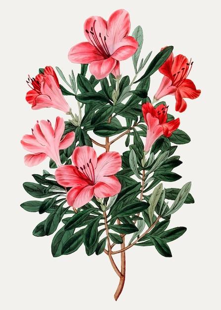 Azálea vermelha chinesa Vetor grátis