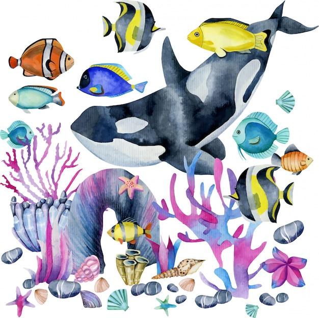 Baleia assassina de aguarela e peixes exóticos oceânicos Vetor Premium