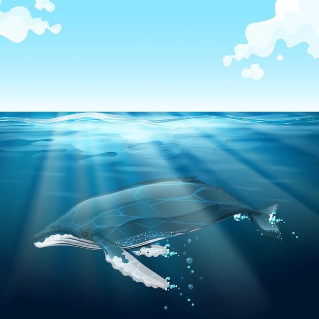 Baleia nadando sob o mar azul Vetor grátis