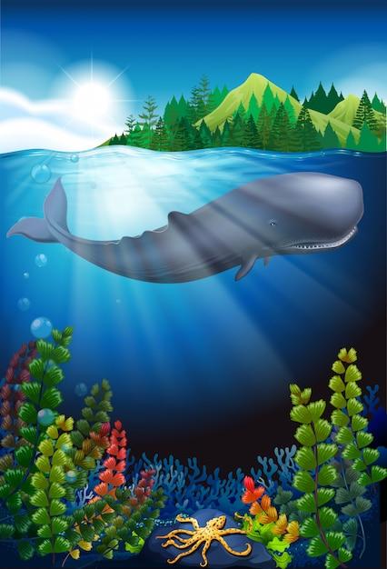 Baleia nadando sob o oceano Vetor grátis