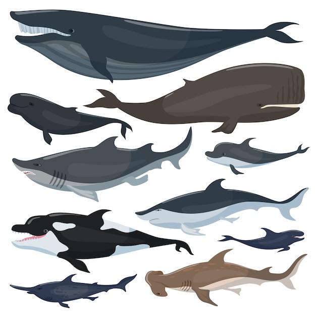 Baleias, golfinhos tubarões e outros animais mamíferos náuticos Vetor Premium