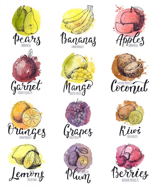 Banana de maçã frutada de frutas e manga exótica com fatias frescas e aquarela logotipo de frutas tropicais com letras sinal conjunto fecundo de ilustração isolado no fundo branco Vetor Premium