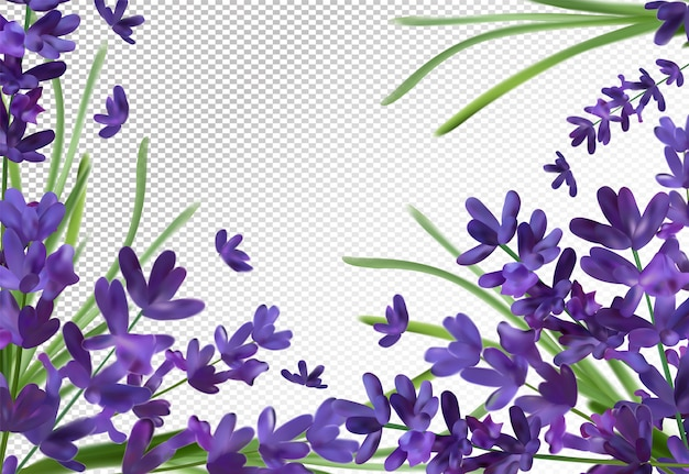 Bando de aroma de lavanda. espaço violeta lavanda. lavanda perfumada Vetor Premium