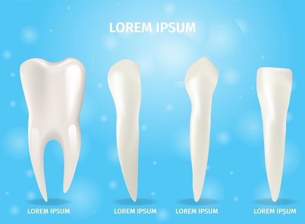Banner realista ilustração quatro tipos de dentes Vetor Premium