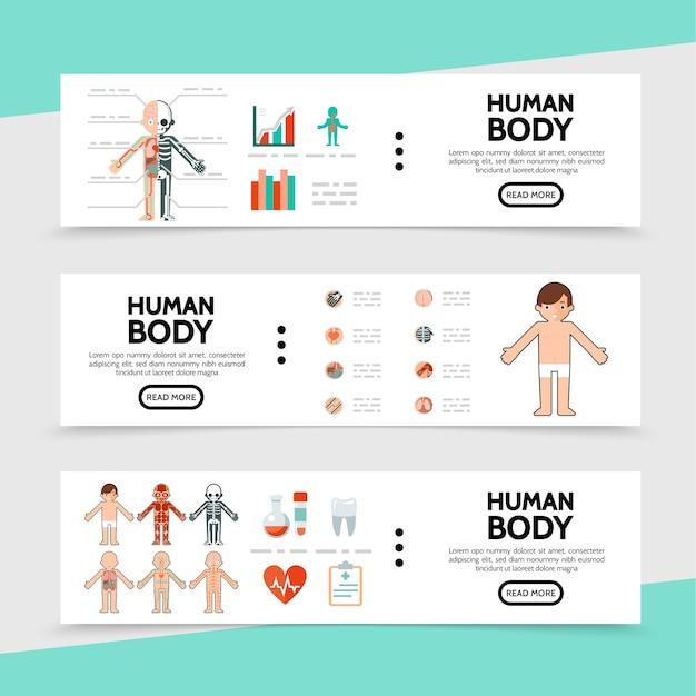 Banners horizontais de anatomia plana Vetor Premium
