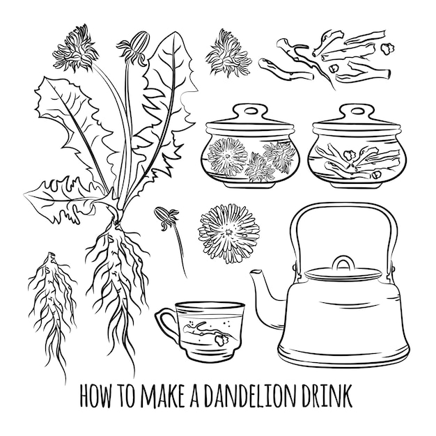Bebida de dente-de-leão como fazer farmácia benefícios planta medicinal botanic nature saúde conjunto de ilustração vetorial para impressão Vetor Premium