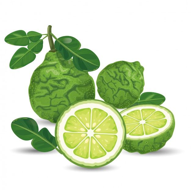 Bergamota verde fresca Vetor Premium