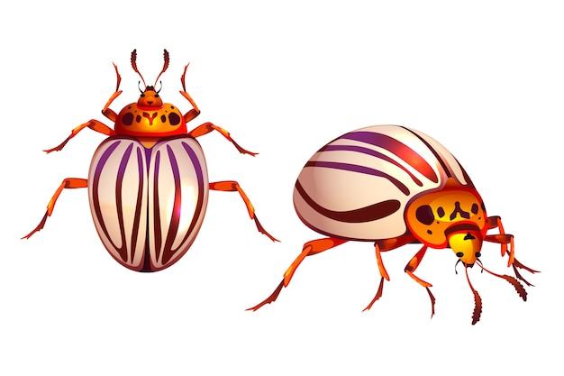 Besouro do colorado, pragas listradas realista de bug de batata Vetor grátis
