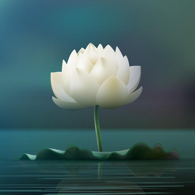Bloco de flores de lótus branco em lago isolado em desfocar o fundo Vetor grátis