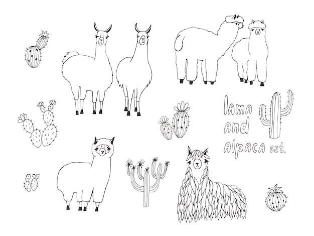 Bonito conjunto de lama, alpaca e cactos. mão ilustrações desenhadas Vetor Premium
