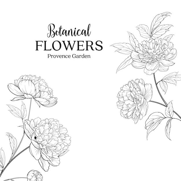 Botânica mão desenhadas flores Vetor Premium