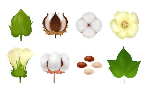 Branco realista e 3d algodão conjunto com etapas de crescer flor em branco Vetor grátis