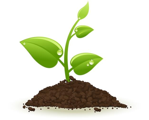 Broto verde crescendo isolado no branco Vetor Premium