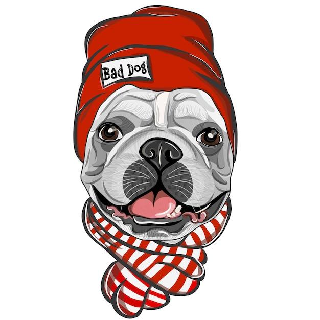 Buldogue francês com chapéu vermelho e lenço. cor, desenho vetorial retrato de um cachorro bulldog francês. Vetor Premium