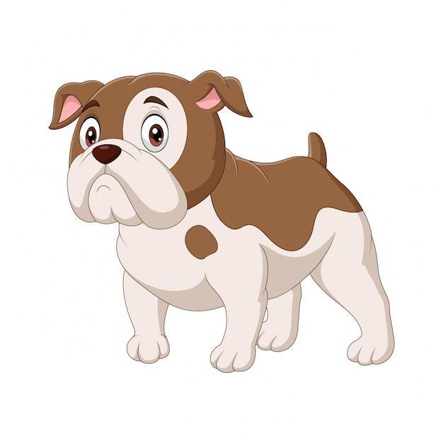 Bulldog de desenhos animados isolado no branco Vetor Premium